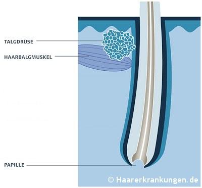 www.haarerkrankungen.de